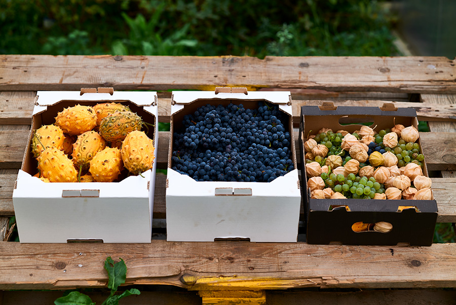 IRiS Gemüseraritäten drei Kisterl