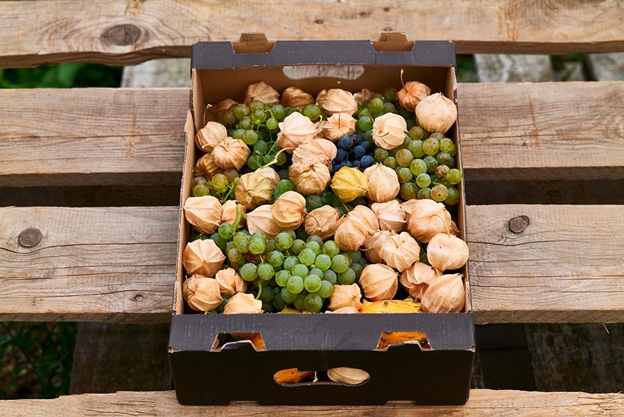 IRiS Gemüseraritäten Kister mit Weintrauben und Physalis