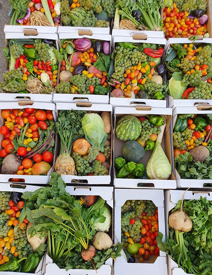 Iris Gemüsekisterl 1