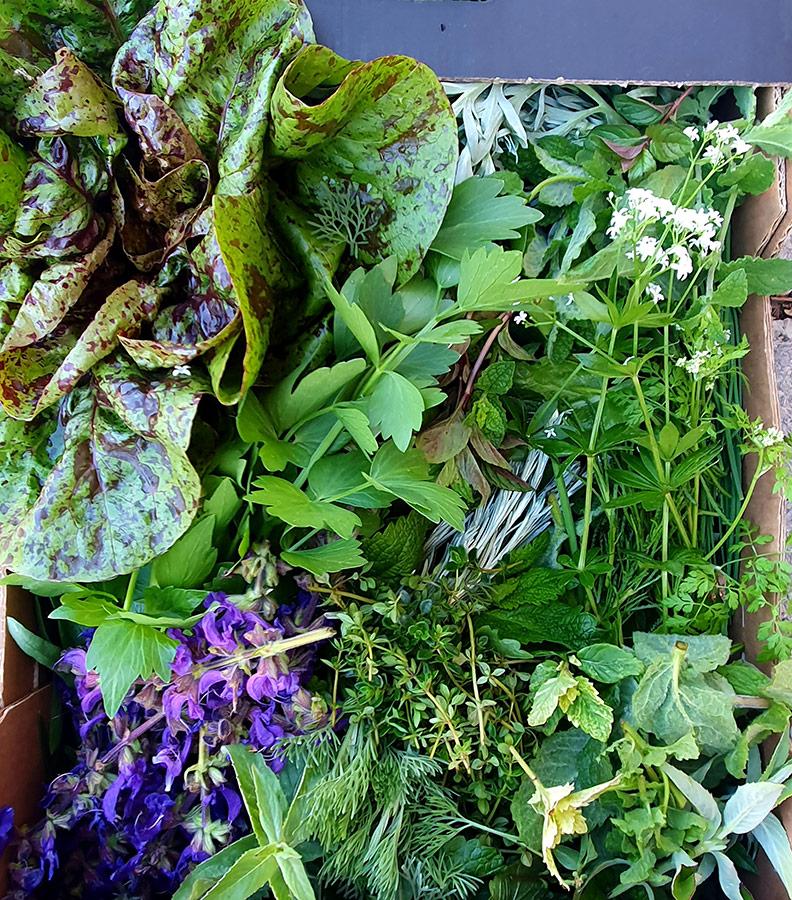 Iris Gemüsekisterl 2