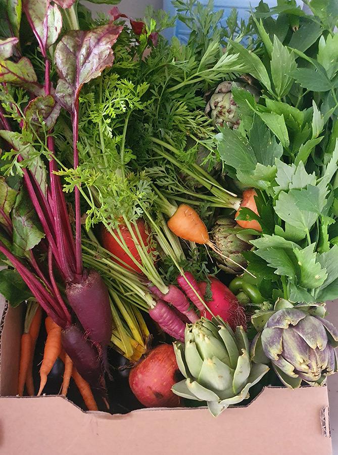 Iris Gemüsekisterl 3