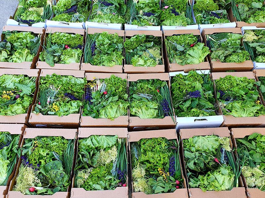 Iris Gemüsekisterl 5