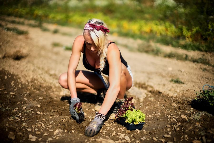 Iris beim Pflanzensetzen am Gemüseraritäten Feld