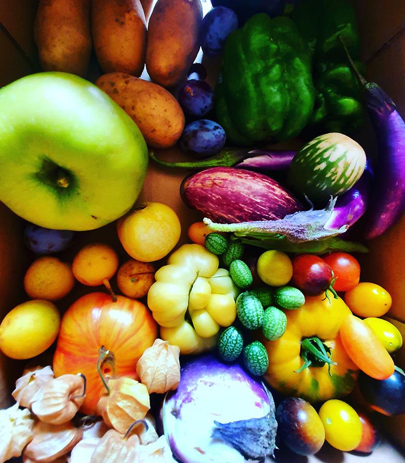 IRiS Gemüseraritäten Mix