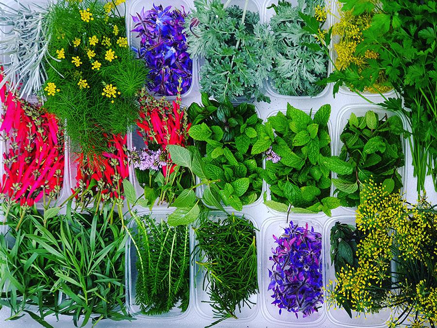 Iris Gemüseraritäten 2