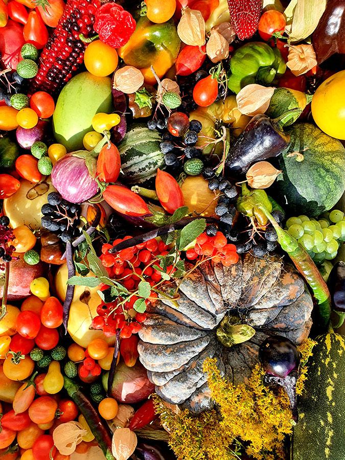 Iris Gemüseraritäten 3