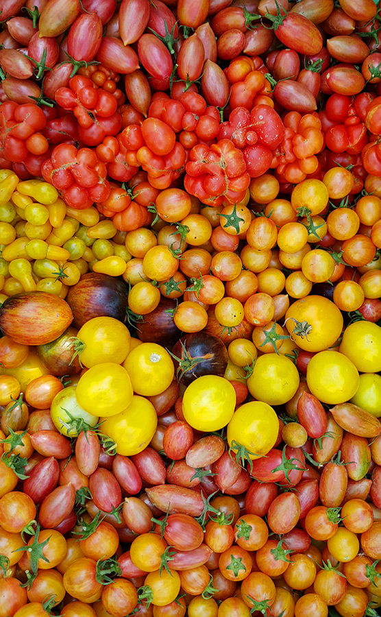 Iris Gemüseraritäten 8