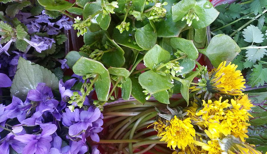 Iris Gemüseraritäten 9